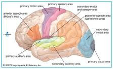 Cerebro logo