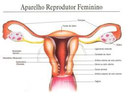 sistema-reprodutor-genital-feminino