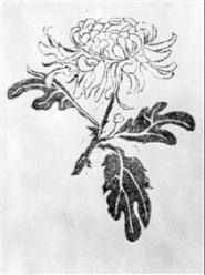 chrysanthemum.jpg!PinterestSmall