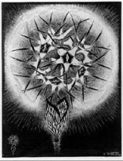 prickly-flower.jpg!PinterestSmall