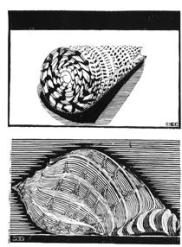 sea-shells.jpg!PinterestSmall