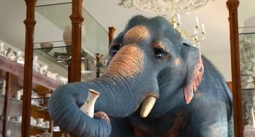 thomas-bassou-comme-un-elephant-dans-un-magasin-de-porcelaine-esma-promotion-2017-7-1520434405